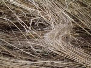 Продам тюки (рулоны) тресты льна