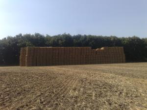 Солома пшенична 2012 року