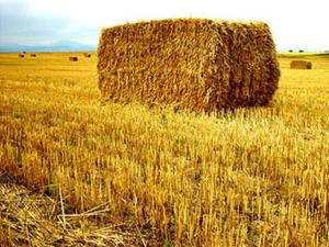 Cолома  пшеничная тюкованая