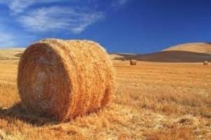 Солома пшеничная - 400 грн