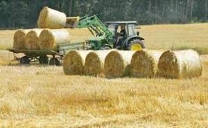 Прессованная солома (пшеничная)