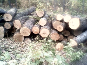 Продам дуб: дрова