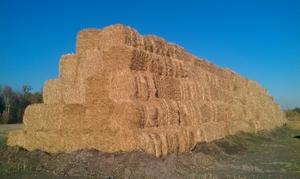 Cолома пшеничная 2015 г в тюках