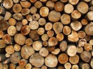 Предприятие купит дрова на постоянной основе