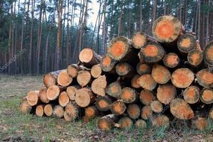 Куплю дрова твердолиственых пород