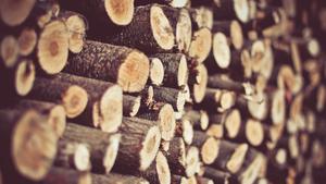 Закупаем дрова всех пород