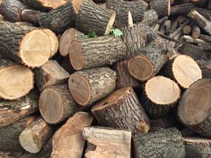 Продаем дрова дубовые!