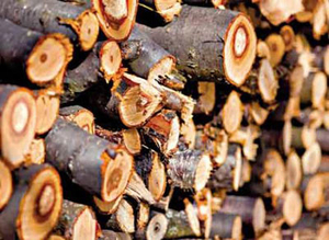 Реализуем дрова фруктовых пород 1000 м3, доставка